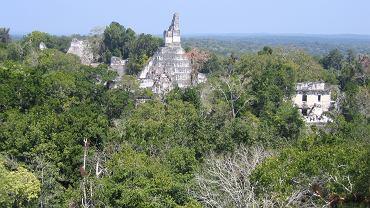 Należące do Majów miasto Tikal