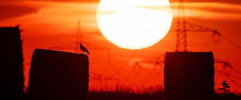 Synoptycy z USA: lipiec najcieplejszym miesiącem w historii na całym świecie