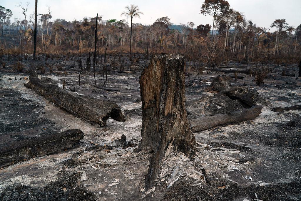 Płonące lasy Amazonii