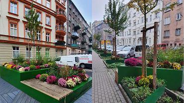 Miasto Wrocław odkupiło chryzantemy od sprzedawców przy cmentarzach. Ponad 400 kwiatów pojawiło się na ulicach miasta