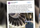 Przed odlotem samolotu zajrzeli do silnika. Ujrzeli tam śpiącego, nieproszonego gościa
