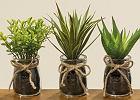 Sztuczne rośliny - efektowna dekoracja mieszkania