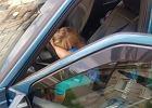 Zabrała ojcu kluczyki i ruszyła w drogę. Siedmiolatka za kierownicą w Wałbrzychu