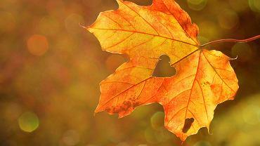Rozpoczęła się równonoc jesienna (zdj. ilustracyjne)