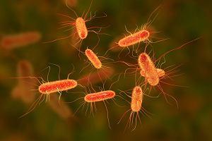 Bakteria Escherichia coli (E. Coli) - czym jest, jakie są objawy zakażenia i jak się przed nią chronić?