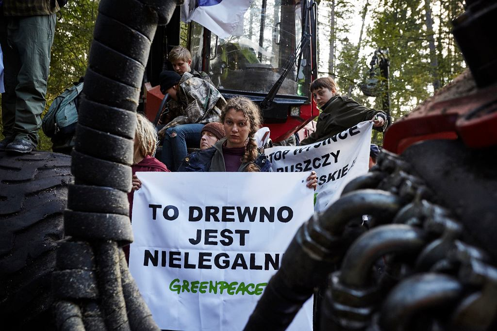 Blokada nielegalnej wycinki drzew w Puszczy Białowieskiej.