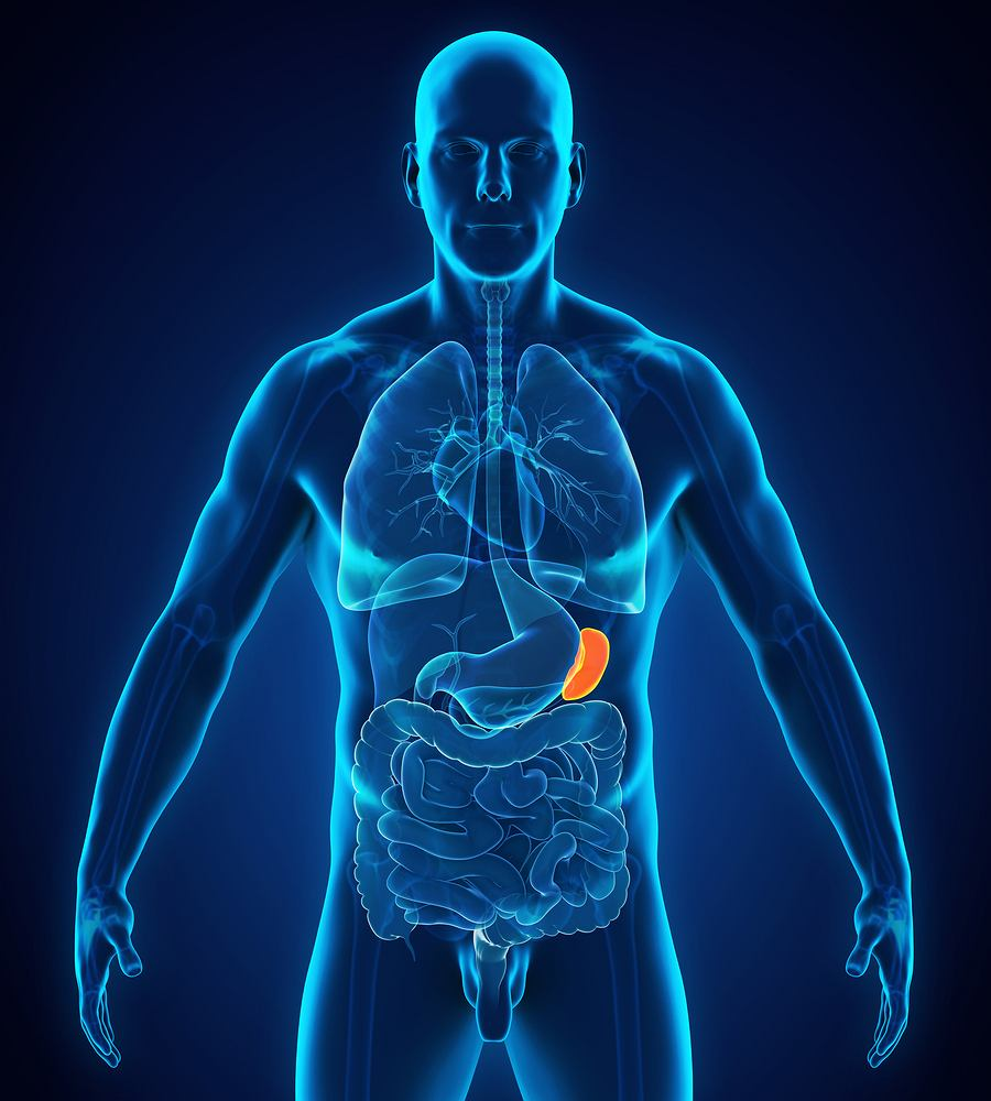 Do najbardziej charakterystycznych objawów mastocytozy układowej należą, m.in. powiększenie śledziony i wątroby