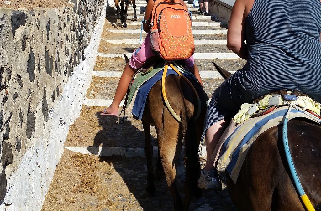 Santorini. Turyści na osiołkach