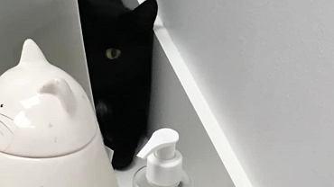 Łupina, kot zgubiony na Lotnisku Chopina, jednak się nie znalazł. 'To nie mój kot' - pisze właścicielka