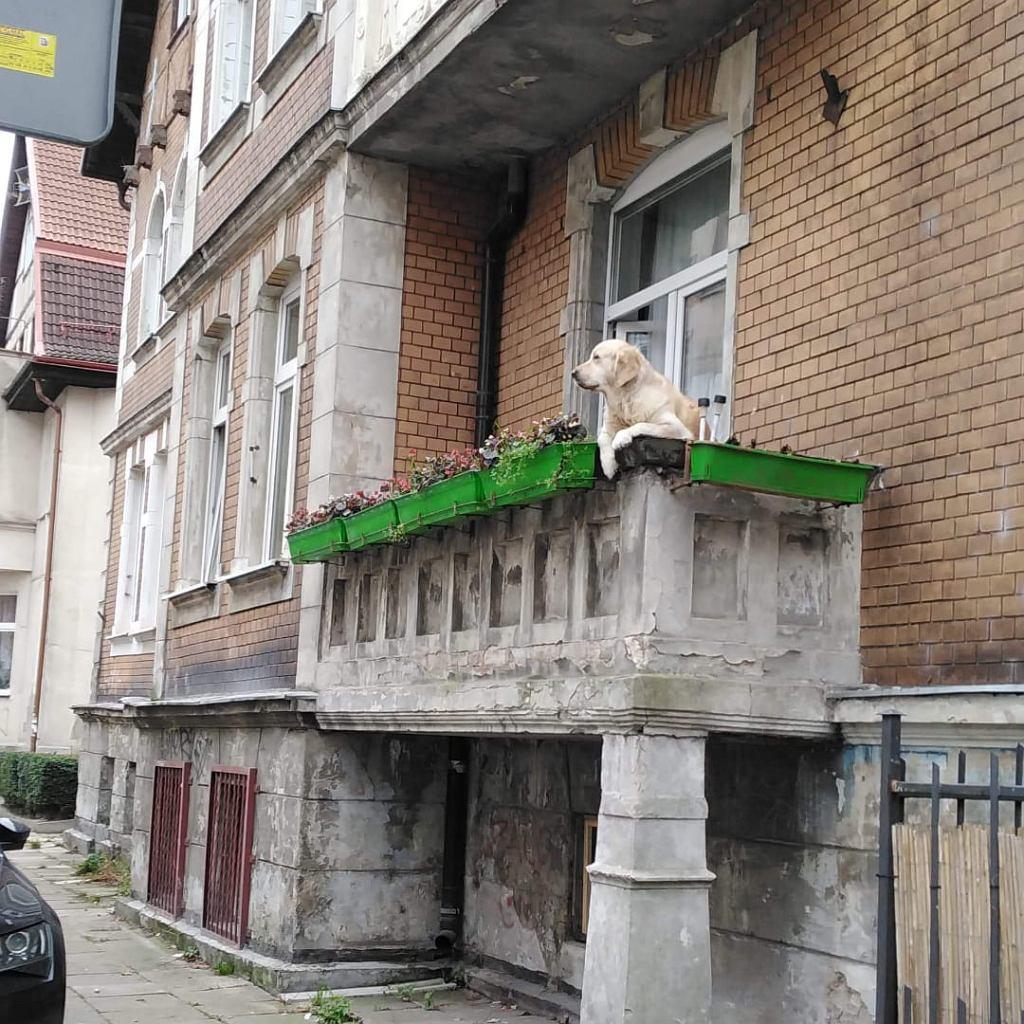 'Słodki pies' na balkonie