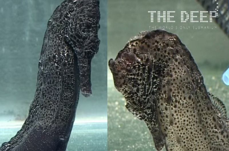 fot.Youtube/The Deep
