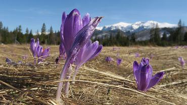 Pogoda. Początek marca będzie wiosenny. Ale zima jeszcze do nas wróci
