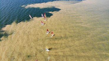 Sinice na Zatoce Gdańskiej