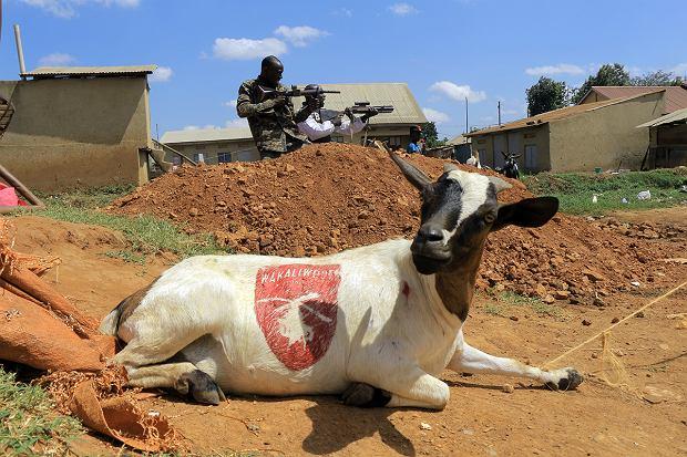 Wakaliwood. Koza na planie filmu Isaaca Nabwany, zwanego 'afrykańskim Tarantino'