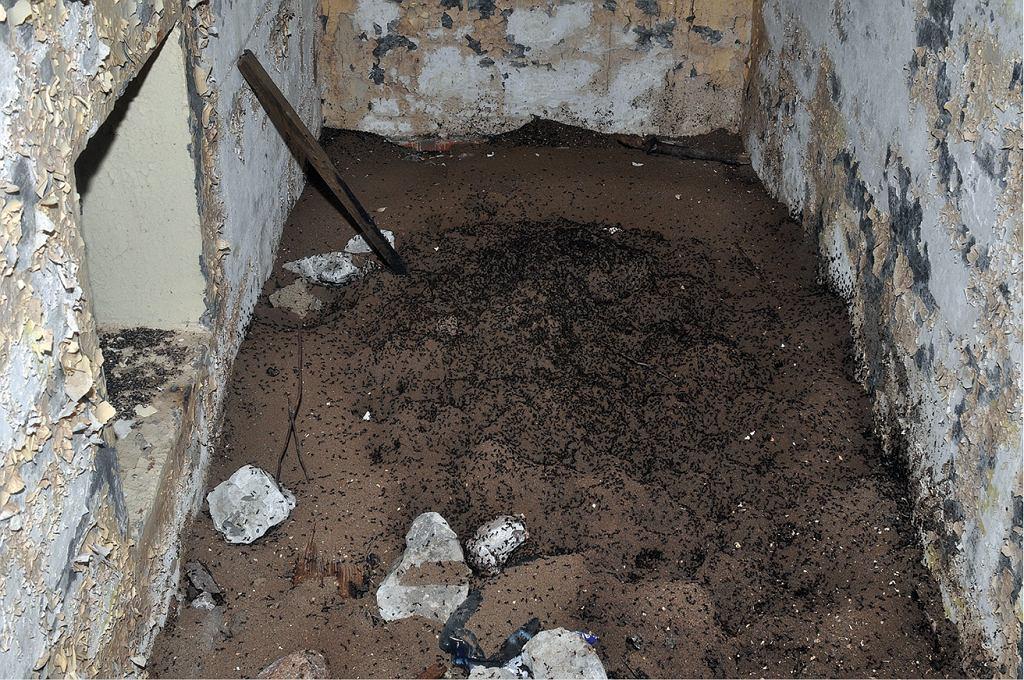 Kolonia mrówek w poradzieckim bunkrze niedaleko niemieckiej granicy