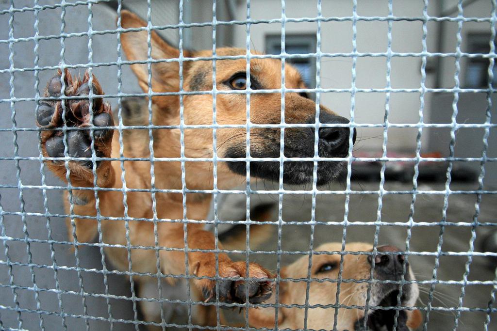 Trudno jest ocenić charakter psa w schronisku (fot: Jakub Orzechowski/ Agencja Gazeta)