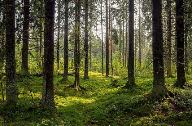W kulturze przemysłowej spacery uważano za próżniactwo, a ono nie jest cnotą (fot. Shutterstock)