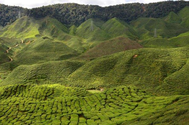 Pola herbaciane/ Fot. domena publiczna/ E3L5/ pixabay.com