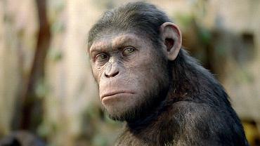 """""""Geneza planety małp"""""""