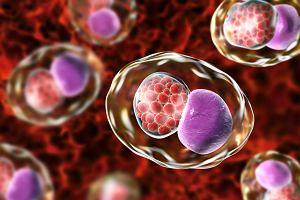 Chlamydia - jakie objawy i choroby wywołuje?