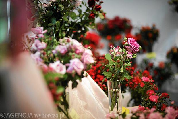 wystawa kwiatów ozdobnych