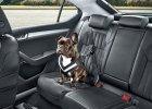 Skoda | Pasy bezpieczeństwa dla psów