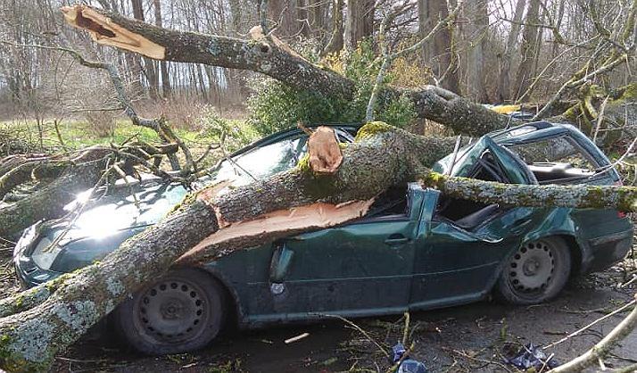 Powalone przez wiatr drzewo runęło na samochód.