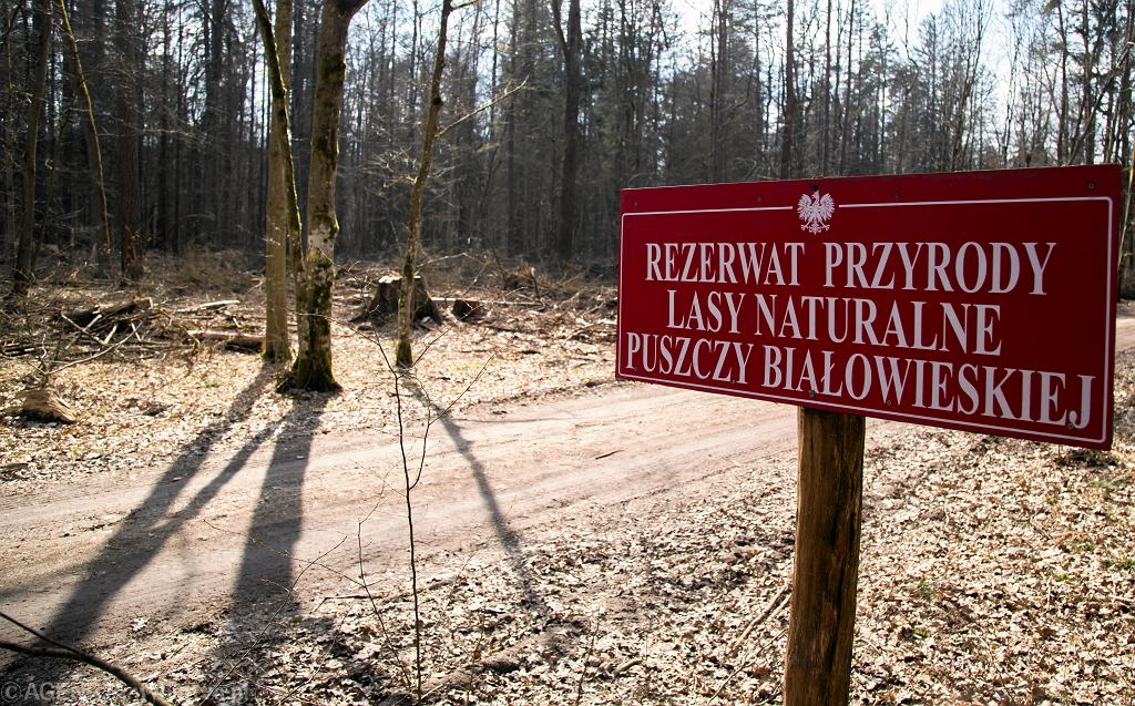 Puszcza Białowieska może trafić na Listę Dziedzictwa Zagrożonego