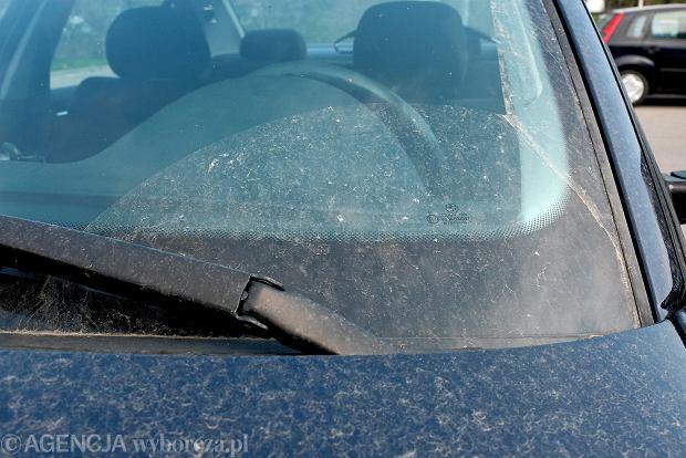 Żółty pył na samochodach to nie pył saharyjski. Czym się różnią i jak usuwać je z samochodu?