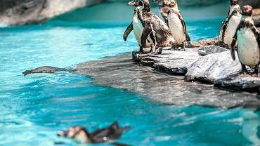 Ogród Zoologiczny w Krakowie: Pingwinarium