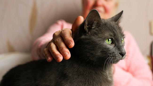 Czy pies, kot, albo kanarek mogą dostać po nas spadek?