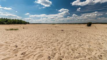 Pustynia Błędowska to największy w Polsce obszar lotnych piasków