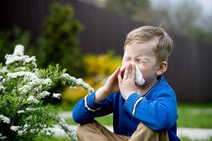 Alergia to choroba na całe życie. Obalamy ten mit oraz kilka innych
