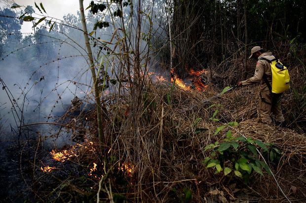 Brazylia. Pożary Amazonii.