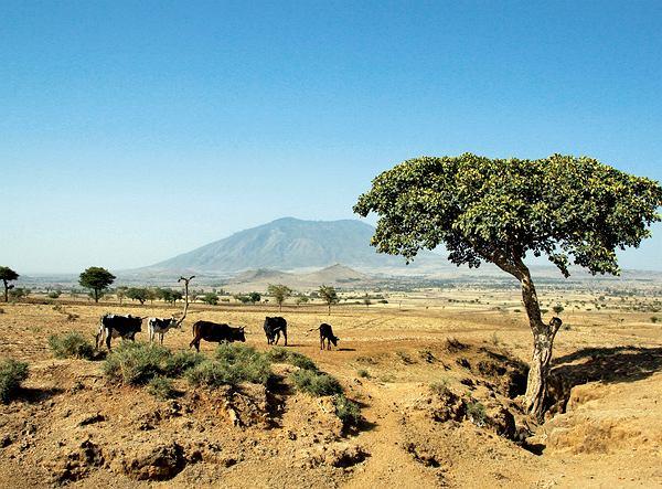 Etiopia - Naszym oczom ukazuje się Zykuala, góra samotnie wystająca z otwartej przestrzeni. Szofer zatrzymuje auto przed głębokim rowem i zarządza wymarsz.
