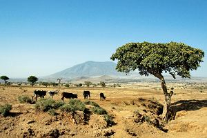 Etiopia na kawie i chacie