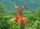 Kenia wycieczka - największe atrakcje