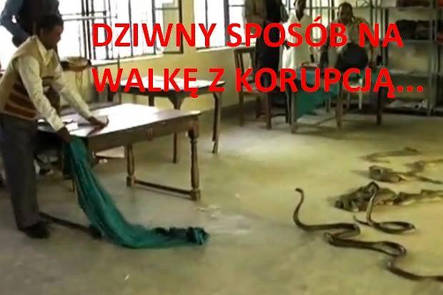 Zdesperowany zaklinacz węży wypuścił swoich podopiecznych w urzędzie skarbowym.