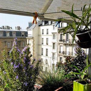 Na zewnętrznym parapecie w kuchni Jacques trzyma doniczki, w których uprawia zioła
