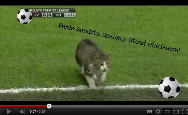 Kot z Anfield