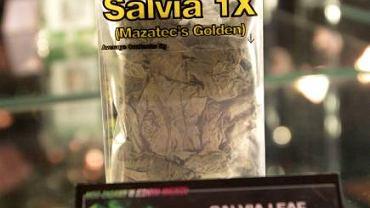 Boska szałwia (Salvia divinorum)