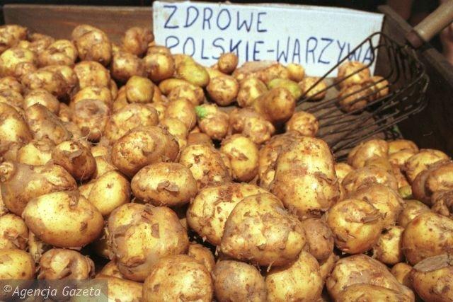 Ziemniaki Fot.AG