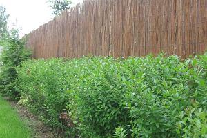 Żywopłot - zielone ogrodzenie