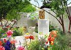 Ogród - zielona terapia