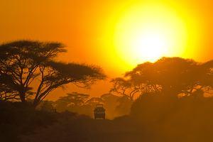 Serce zostało w Afryce