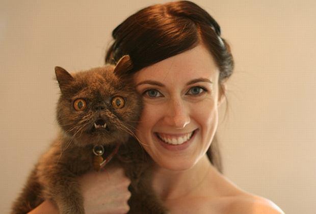 Top 10 Najbrzydszych Kotów świata Zdjęcia