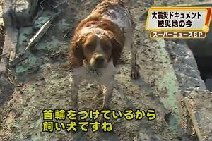 Pies ratuje psa.