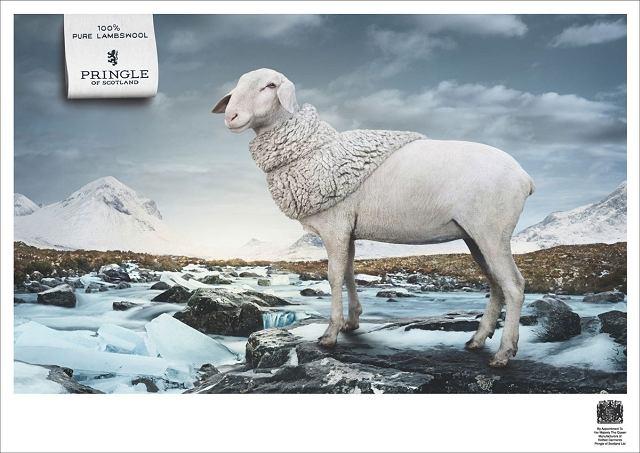 kampania reklamowa Pringle of Scotland