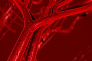 Naczynia krwionośne, czyli tętnice, żyły i włośniczki. Jak są zbudowane i do czego służą?