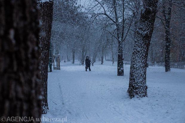 Zdjęcie numer 19 w galerii - Zima w Krakowie - śnieg przykrył ulice, domy, parki [GALERIA]